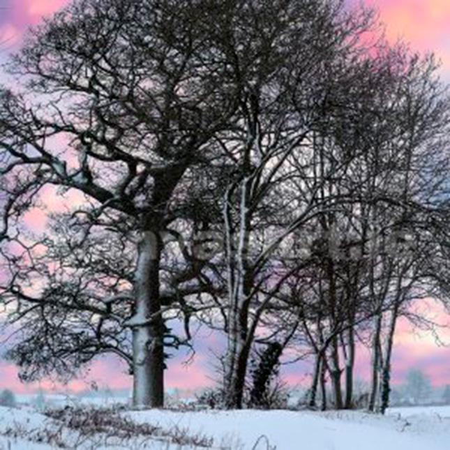 Canvas Kunstdruck - Gemälde Bäume in Schnee-Winterlandschaft
